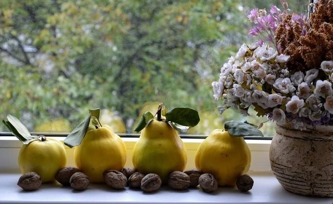 Il giallo, il più bel colore dell'autunno moldavo